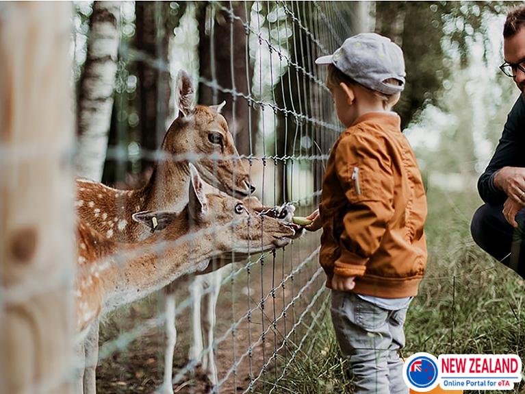 Feeding-animals-in-zoo